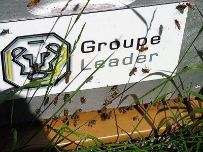 GROUPE LEADER ABEILLES ENVIRONNEMENT