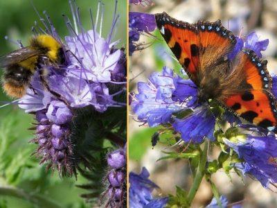 graines biodiversite rse leader interim environnement ecologie insectes